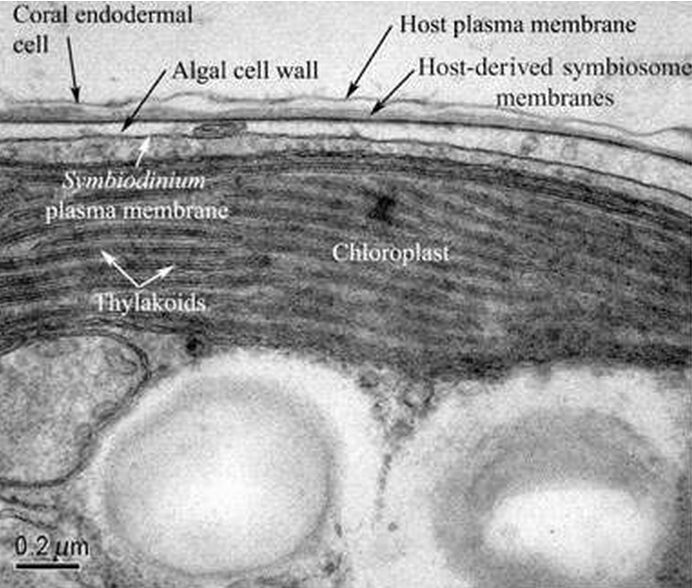 Subcellular.png