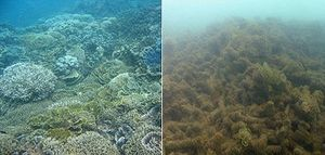 Before and after pictures of damages caused by Cyclone Yasi in MacDonald reef